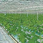 Línea agrícola
